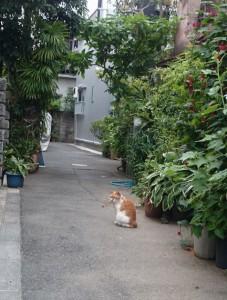 sendagi_cat